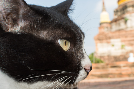 warm weather: Cat relax in landscape amid warm weather