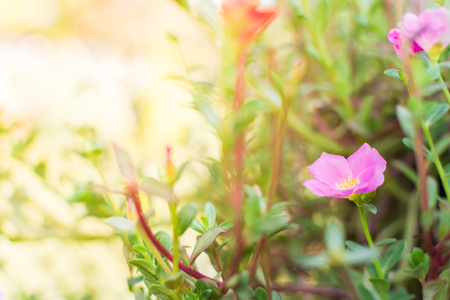 plant nature: Sunset with flower. Soft Focus Stock Photo