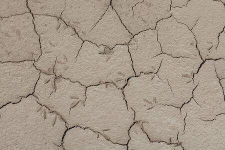 desert footprint: Footprints in the soil drought cracked texture Stock Photo