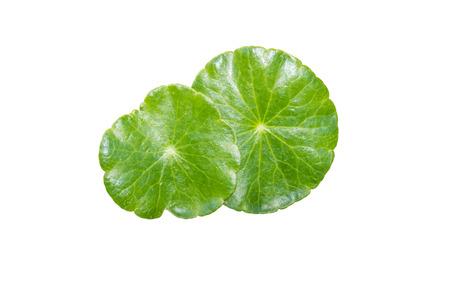 aural: Closeup Leaf green, Clipping path