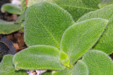 aural: Closeup Leaf green