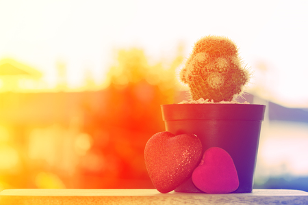 dry flowers: Cactus with heart on wooden table. made with color filters Stock Photo
