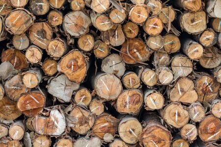 stacked up: Dry eucalyptus firewood stacked up on top of each other in a pile. Stock Photo