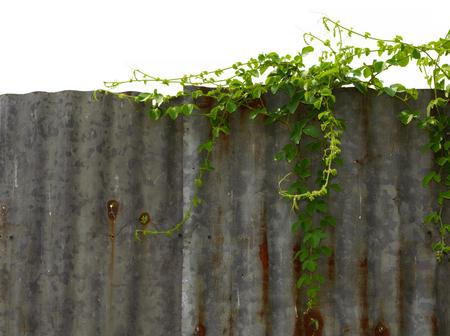 zinc: Vine on zinc wall background