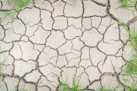 Grass in soil drought cracked texture Stock Photo