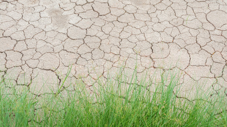 Grass in soil drought cracked texture Imagens