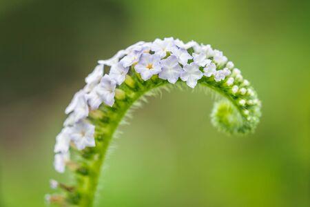 Flower grass blurred in outdoor Stock Photo