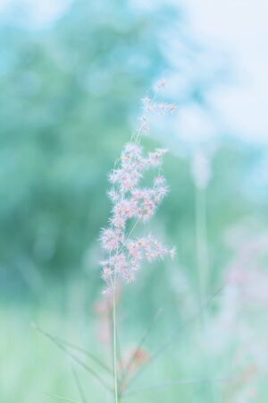 Flower grass in outdoor, vintage background Stock Photo