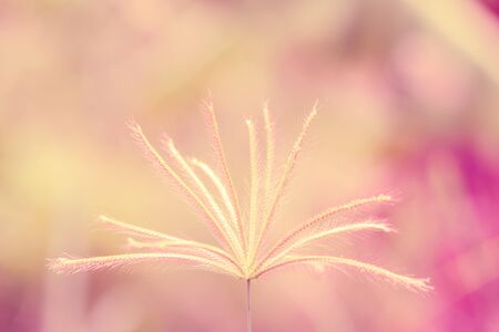Flower grass blurred in outdoor Stock Photo