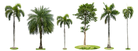 Palmiers collection isolé sur fond blanc Banque d'images - 83822829