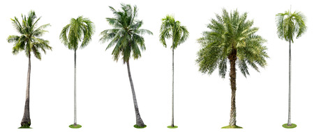 Palm trees isolated collection on white background Stok Fotoğraf