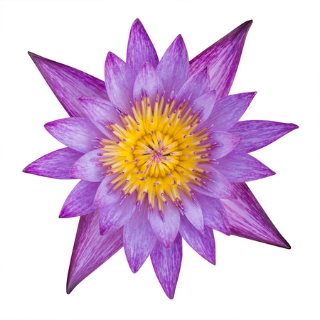Lotus flower pink color on white background. have clipping path