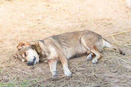 The dog sleeping under the sun.