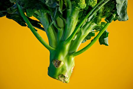 Close up of broccoli stem, against yellow background.