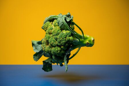 Broccoli plant against colorful background.