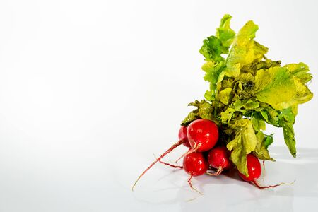 Red radishes isolated against white background, with copy space next to it. Banco de Imagens