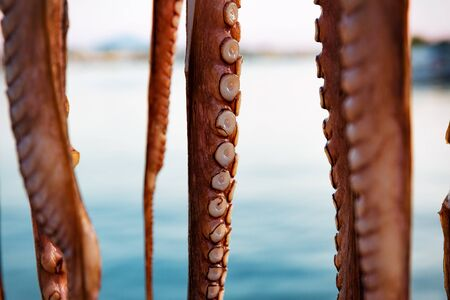 Close-up of octopus tentacles drying in the sun, against mediterranean sea in Greece. Banco de Imagens