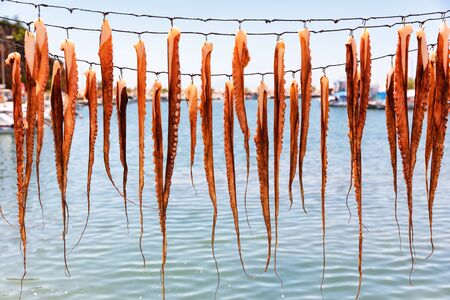 Octopus tentacles drying in the sun.