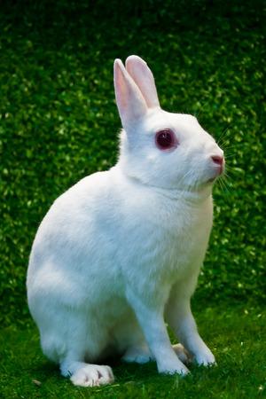 britannia: britannia petite rabbit pose on the grass