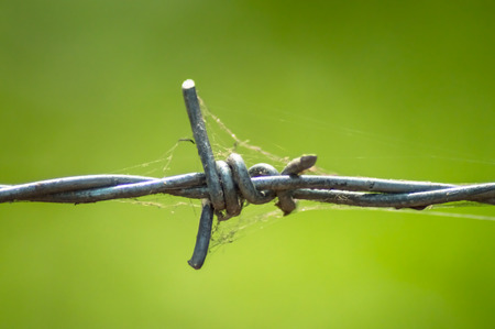 The barbed wire and spider web fence