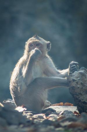 forest fire: El mono y el humo en el incendio forestal