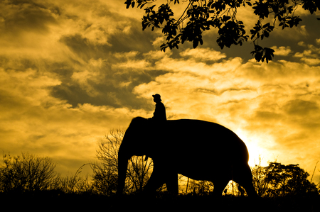 mahout: The asian elephant and mahout in forest silhouette
