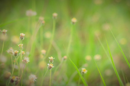 reed stem: The tropical grass in the countryside of thailand Stock Photo