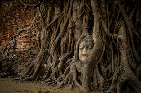 The banyanroot wrap around the buddha face at Wat Mahathat Ayutthaya Stock Photo