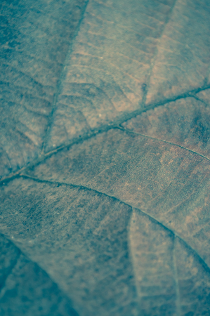 dry and old abstract vintage teak tree leaf texture background