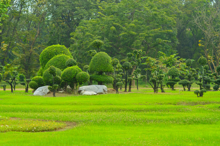 tree in garden  landscaping decoration art design
