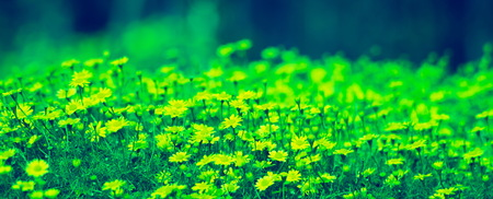 beautiful natural flower in garden park landscaping Standard-Bild