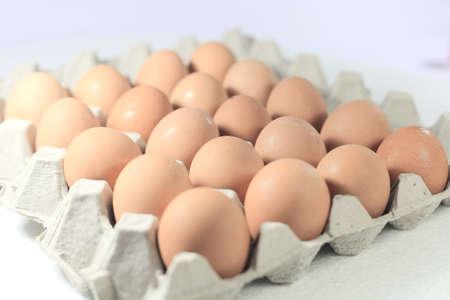 Panel eggs photo