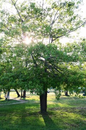 tree behind sun  Stock Photo