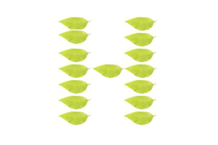 H  leaf character Stock Photo
