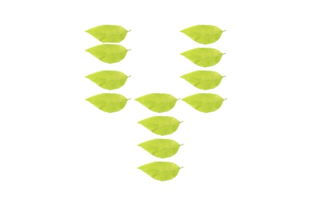 Y leaf character Stock Photo