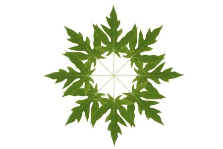 papaya leaf symbol