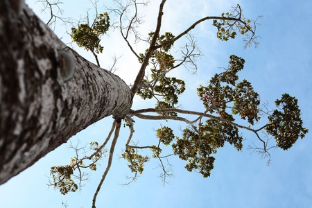 high tree to sky