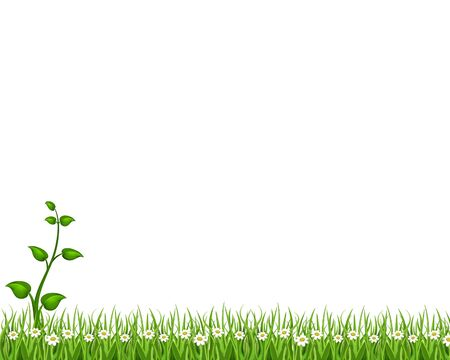 grass background photo