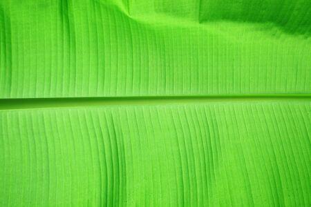 fondo de la hoja verde