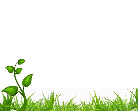 hierba verde con fondo aislado