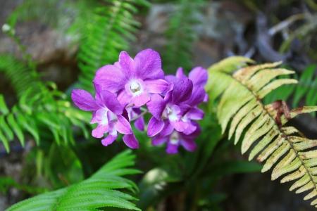violet flower in forest