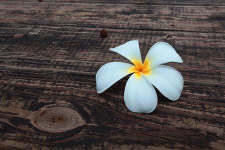 flor blanca en el piso de madera