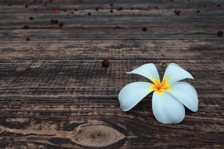 white flower on wooden floor photo
