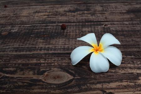 white flower on wooden floor