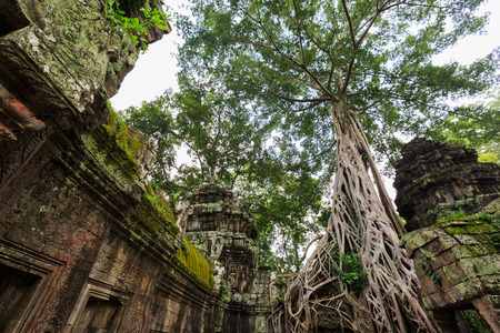 phrom: Ta Phrom, near Angkor Wat, is a temple complex in Cambodia that was built in the 13C but has since been reclaimed by jungle. The decision has been made to leave the temple uncleared and the site has been used to film scenes from several movies including T