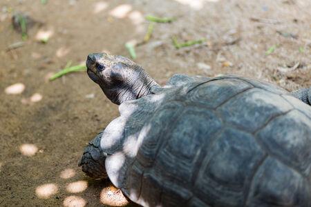 primitivism: Turtle