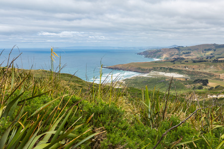 new zealand flax: Coastal view from top of the mouintain. New Zealand, Otago Peninsula