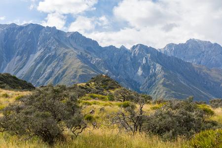 aoraki mount cook national park: image of Mount Cook National Park New Zealand