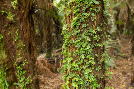 l natural: Native bush of New Zealand on the way to Cathedral Cave