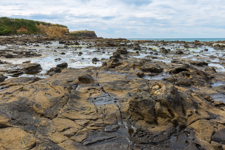 petrified fossil: Curio Bay, an ancient geological phenomenom of the petrified forest. the Catlins New Zealand Stock Photo